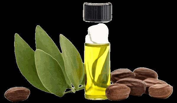 tác dụng làm đẹp da và tóc của dầu jojoba